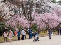 Families and couples photograph Sakura blossoms at Hommaru Palace, Nagoya, Japan. NAGOYA, JAPAN - MARCH 27, 2018: Families and couples talking photographs and stock photography