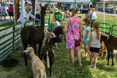 Families Ehjoying de Petting-Dierentuin stock foto's