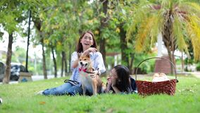 Families with mothers and daughters playing with Shiba Inu dogs in the park in spring