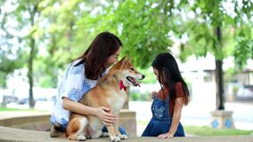 Families with mothers and daughters playing with Shiba Inu dogs in the park in the summer. Dog in the garden.