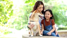 Families with mothers and daughters playing with Shiba Inu dogs in the park in the summer.