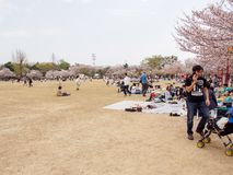 Families picnic under Cherry Blossom trees, Himeji Castle, Japan stock images