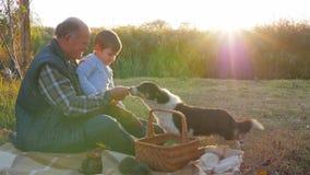 Familieverhoudingen, de herfstvrije tijd van jongen met grootvader en hond op picknick op openlucht stock footage