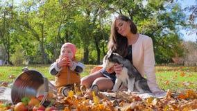 Familievrije tijd, weinig appel van de jong geitjegreep dichtbij moeder met hond op plaid met emmer fruit in een de herfstpark na stock videobeelden