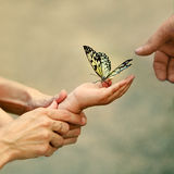 Familiy moment with butterfly Royalty Free Stock Photo