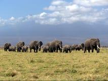 Familj av afrikanska elefanter Arkivbilder