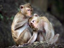 Familj av apor i skogen Royaltyfri Bild