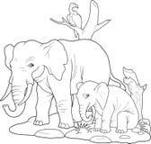 Familj av att gå för elefanter Royaltyfria Foton