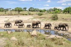 Familj av elefants Royaltyfria Foton