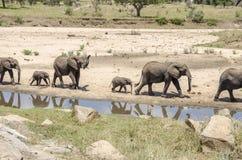 Familj av elefants arkivbild