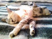 Familj av katter på säng i tillstånd av sammanlagd avkoppling royaltyfria foton