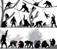 Familj av schimpansen Arkivfoton