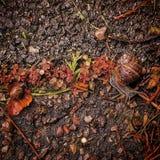 Familj av Snails Royaltyfria Foton