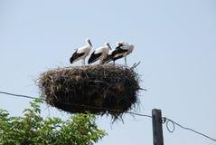 Familj av storkar i redet på den elektriska polen royaltyfri bild