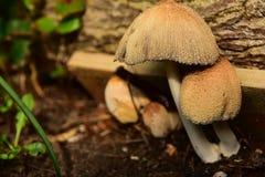 Familj av svampar Fotografering för Bildbyråer