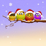Familj av ugglor på jul Royaltyfria Foton