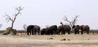 Familj för afrikansk elefant på en dammig waterhole arkivbild