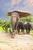 Familj för asiatiska elefanter Arkivbilder