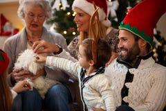 Familj för liten hund för julsmekning royaltyfri foto