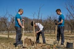 Familj för tre utvecklingar som tillsammans planterar ett träd Royaltyfria Foton