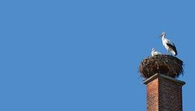 Familj för vit stork Fotografering för Bildbyråer