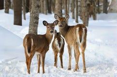 Familj i natur under vinter arkivbild