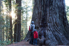 Familj i redwoodträdskog arkivbilder