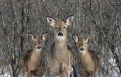 Familj i skog under vinter arkivbild