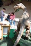 Familj och dinosaurien Royaltyfri Bild