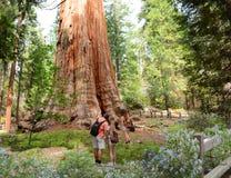 Familj på att fotvandra undersökande sequoiaträd för tur arkivfoto