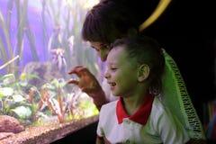 Familj som håller ögonen på marin- liv royaltyfri fotografi