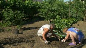 Familj som planterar björkträd i trädgård Persikor, vinranka och blommor på bakgrund
