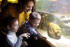 Familj som ser fiskar Royaltyfria Bilder