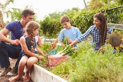 Familj som tillsammans arbetar på odlingslott Royaltyfri Bild