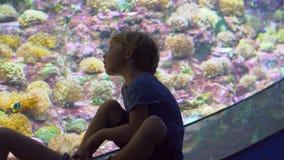 Familjen besöker en oceanarium Pojke som lootking på ett stort ett akvarium med tropiska fiskar lager videofilmer