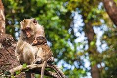 Familjen härmar (Krabba-äta macaquen) förkylning i morgon på branc Royaltyfri Foto
