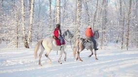 Familjen i vinter parkerar, en promenad på hästrygg Ryttare på en häst Gå i den nya luften arkivfilmer