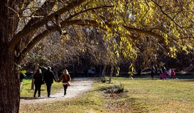 Familjen som spenderar deras fritid i trevligt soligt väder i ett naturligt, parkerar arkivbilder