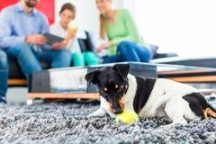 Familjhund som spelar med bollen i vardagsrum arkivfoto