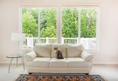 Familjkatt som tycker om soffan inom vardagsrum Arkivbild