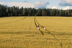 Familjmamma och två barn flicka och pojke som går de vetefälten och skogarna Arkivfoto
