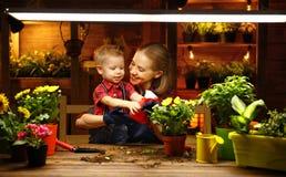 Familjmodern och behandla som ett barn växer blommor, transplantatplantor i gar Royaltyfri Foto