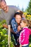 Familjplockningbär i trädgård Royaltyfri Bild