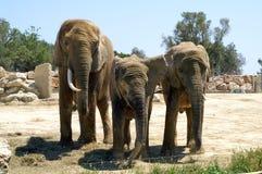 Familjstående i zoo av Segean, Frankrike Arkivbild