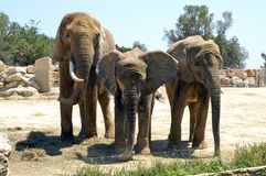 Familjstående i zoo av Segean, Frankrike Royaltyfria Foton