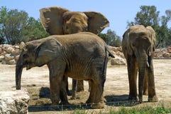 Familjstående i zoo av Segean, Frankrike Royaltyfri Foto