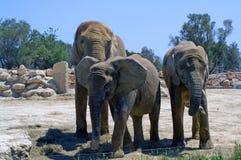 Familjstående på den Segean zoo Arkivfoton