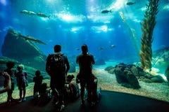 Famille à Lisbonne Oceanarium Image libre de droits