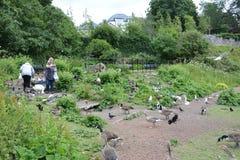 Famille alimentant les oiseaux photos libres de droits