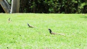 Famille animale de lézards moulus sur le fond de vert d'herbe image stock